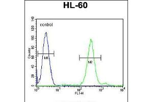 Image no. 1 for anti-Cornichon Homolog 2 (Drosophila) (CNIH2) (AA 31-59), (N-Term) antibody (ABIN5536842)
