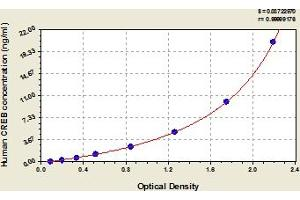 Image no. 1 for cAMP Responsive Element Binding Protein 1 (CREB1) ELISA Kit (ABIN6973743)