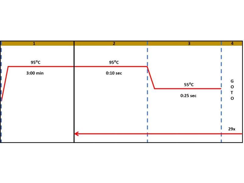 Interferon gamma (IFNG) IQ-ELISA Kit (3)