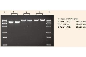 image for TransStart® FastPfu DNA Polymerase (ABIN5519527)
