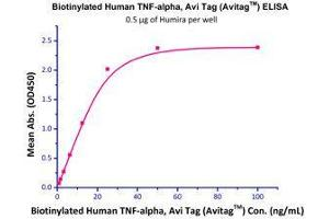 Image no. 1 for Tumor Necrosis Factor alpha (TNF) (AA 77-233) (Active) protein (AVI tag,Biotin,His tag) (ABIN2870564)