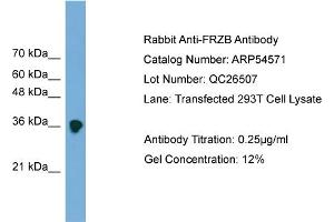 Western Blotting (WB) image for anti-FRZB Antikörper (Frizzled-Related Protein) (Middle Region) (ABIN2785778)