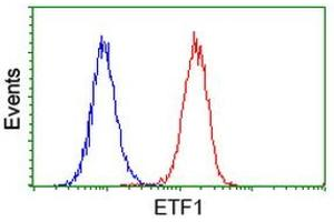 Image no. 1 for anti-Eukaryotic Translation Termination Factor 1 (ETF1) antibody (ABIN1498129)