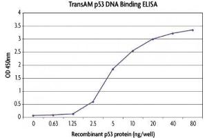 Activity Assay (AcA) image for Tumor Protein P53 (TP53) (Active) protein (His tag) (ABIN2669713)