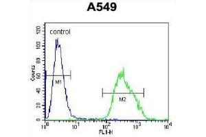 Image no. 1 for anti-Paralemmin 3 (PALM3) antibody (ABIN2996355)