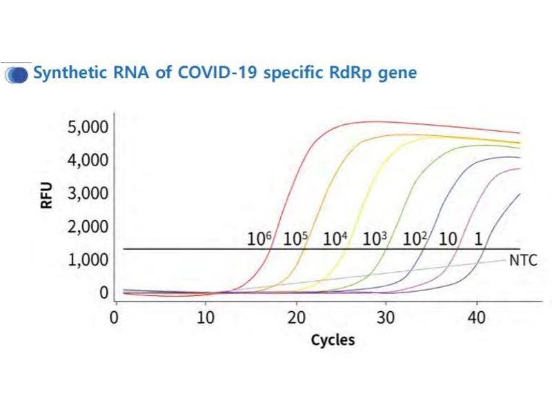 Image no. 4 for 1copy™ COVID-19 qPCR Kit (ABIN6952539)