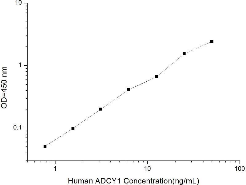 Adenylate Cyclase 1 (Brain) (ADCY1) ELISA Kit (2)