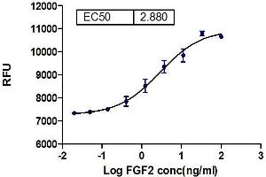Image no. 1 for Fibroblast Growth Factor 2 (Basic) (FGF2) (Active) protein (ABIN413246)