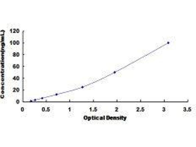 Lactate Dehydrogenase C (LDHC) ELISA Kit