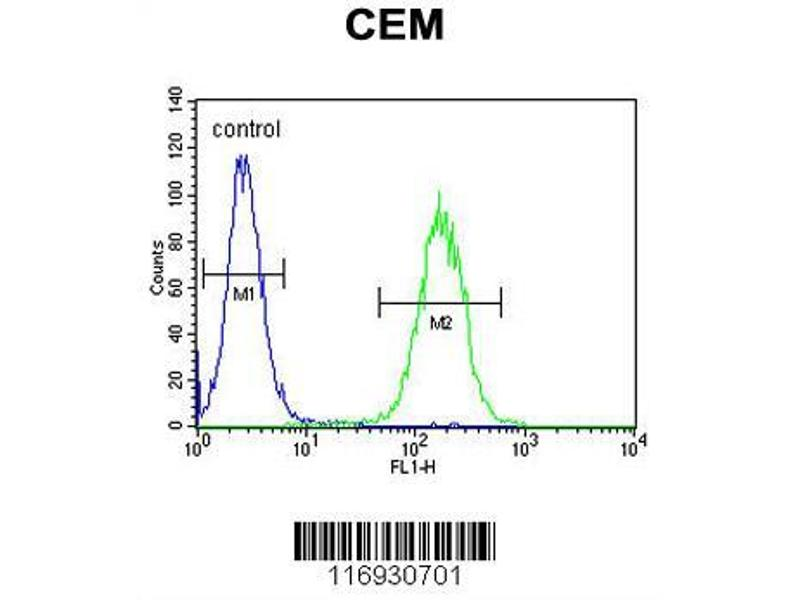 Flow Cytometry (FACS) image for anti-Cytochrome P450, Family 11, Subfamily B, Polypeptide 2 (CYP11B2) (AA 120-147), (Center) antibody (ABIN655163)