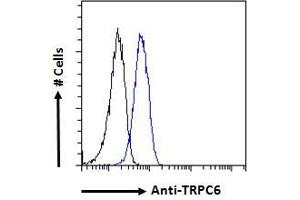 Image no. 1 for anti-Transient Receptor Potential Cation Channel, Subfamily C, Member 6 (TRPC6) (C-Term) antibody (ABIN185460)