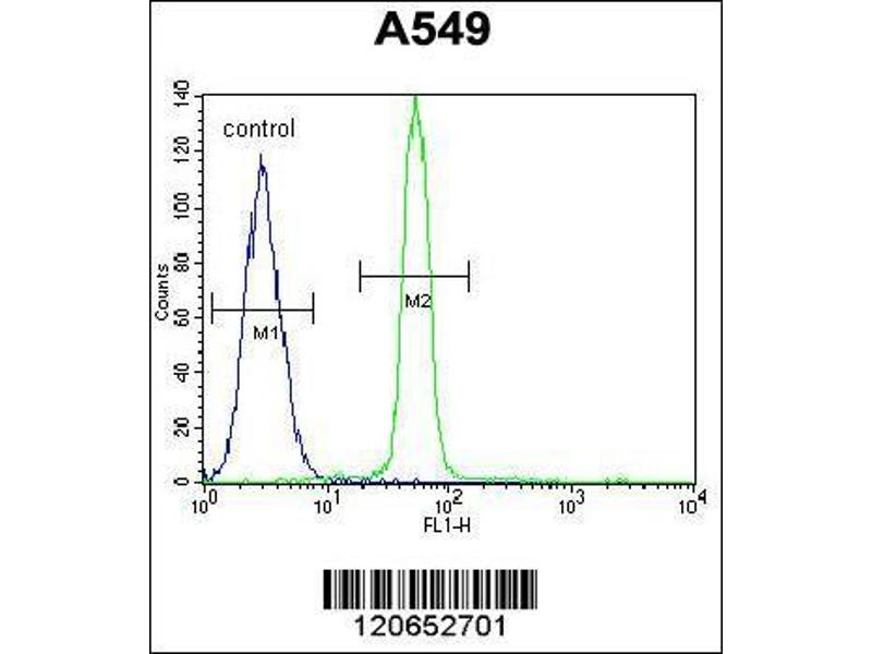 Flow Cytometry (FACS) image for anti-CREB1 antibody (CAMP Responsive Element Binding Protein 1) (AA 105-132) (ABIN655653)