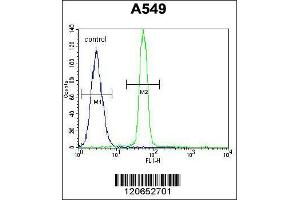 Flow Cytometry (FACS) image for anti-CAMP Responsive Element Binding Protein 1 (CREB1) (AA 105-132), (Center) antibody (ABIN655653)