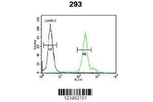 Image no. 2 for anti-Glycoprotein M6A (GPM6A) (AA 232-259), (C-Term) antibody (ABIN653290)