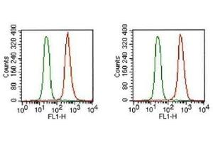 Flow Cytometry (FACS) image for anti-FGFR1 antibody (Fibroblast Growth Factor Receptor 1) (Isoform alpha) (ABIN268017)