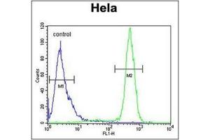 Image no. 1 for anti-Sodium Channel, Voltage-Gated, Type I, beta (SCN1B) (AA 70-98), (N-Term) antibody (ABIN954692)