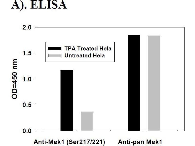 Mitogen-Activated Protein Kinase Kinase 1 (MAP2K1) ELISA Kit (3)