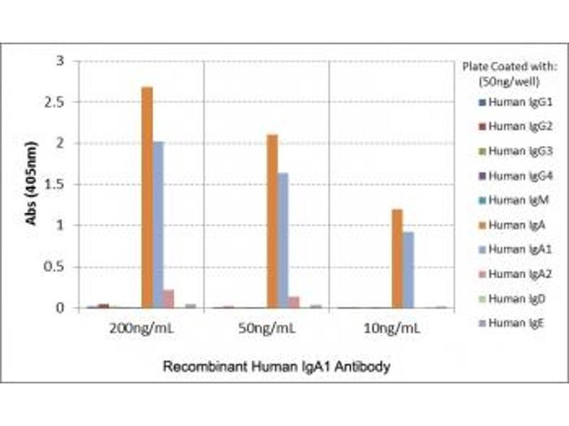 Image no. 4 for Rabbit anti-Human IgA1 antibody (ABIN4955858)