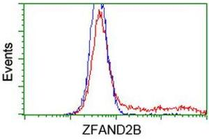 Image no. 2 for anti-Zinc Finger, AN1-Type Domain 2B (ZFAND2B) antibody (ABIN1501801)