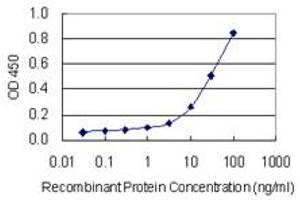 Image no. 1 for anti-Receptor (G Protein-Coupled) Activity Modifying Protein 2 (RAMP2) (AA 58-145) antibody (ABIN948916)
