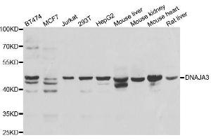 Image no. 1 for anti-DnaJ (Hsp40) Homolog, Subfamily A, Member 3 (DNAJA3) antibody (ABIN6139698)