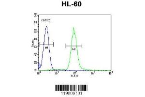 Flow Cytometry (FACS) image for anti-Dipeptidyl-Peptidase 3 (DPP3) (AA 583-612), (C-Term) antibody (ABIN655179)
