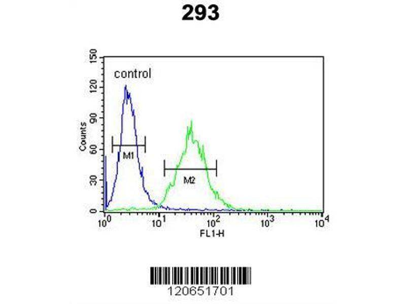 Flow Cytometry (FACS) image for anti-CEBPB antibody (CCAAT/enhancer Binding Protein (C/EBP), beta) (AA 271-298) (ABIN652248)