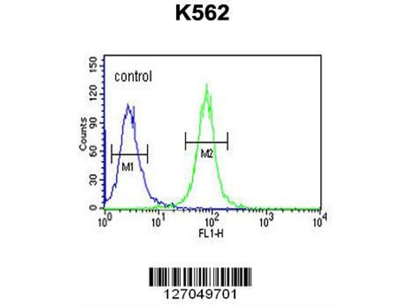 Flow Cytometry (FACS) image for anti-NPSR1 Antisense RNA 1 (NPSR1-AS1) (AA 495-523), (C-Term) antibody (ABIN651699)
