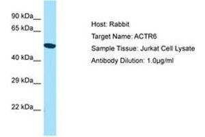 Image no. 1 for anti-ARP6 Actin-Related Protein 6 Homolog (Yeast) (ACTR6) (AA 243-292) antibody (ABIN6750147)