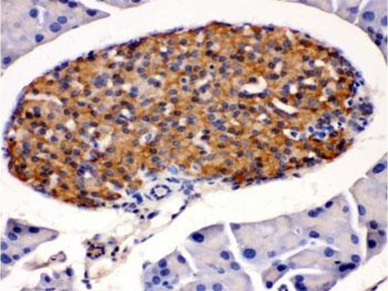 Image no. 3 for anti-Hydroxysteroid (11-Beta) Dehydrogenase 2 (HSD11B2) antibody (ABIN4951362)