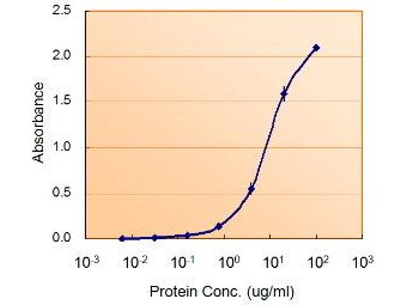 image for anti-Glucose-6-Phosphate Dehydrogenase (G6PD) (AA 308-320) antibody (ABIN2562716)