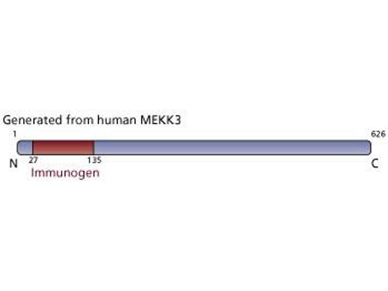 image for anti-Mitogen-Activated Protein Kinase Kinase Kinase 3 (MAP3K3) (AA 27-135) antibody (ABIN968366)