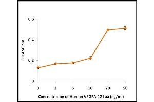 Image no. 2 for Vascular Endothelial Growth Factor (VEGF) (Active) protein (ABIN5509529)