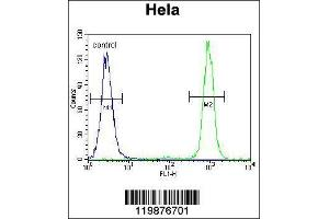 Flow Cytometry (FACS) image for anti-Slingshot Homolog 3 (Drosophila) (SSH3) (AA 575-602), (C-Term) antibody (ABIN655643)