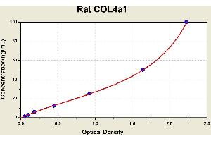 Image no. 1 for Collagen, Type IV, alpha 1 (COL4A1) ELISA Kit (ABIN1114260)