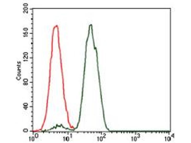 image for anti-NCK Adaptor Protein 1 (NCK1) antibody (ABIN1499651)