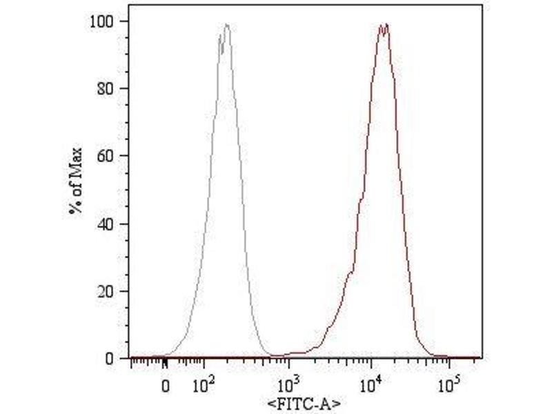 Image no. 1 for anti-Endoglin (ENG) antibody (FITC) (ABIN93940)