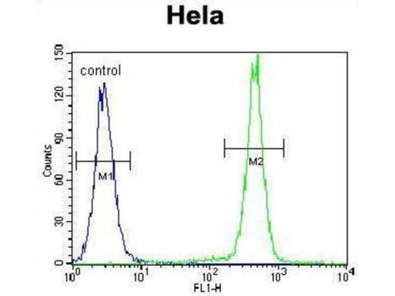 Image no. 2 for anti-Protocadherin beta 10 (PCDHB10) antibody (ABIN2996327)