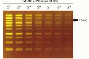 image for FluoroStain™ DNA Fluorescent Staining Dye (Green, 10,000X) (ABIN5662584)