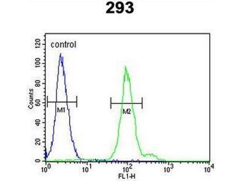 Flow Cytometry (FACS) image for anti-Complement Factor B antibody (CFB) (AA 474-504) (ABIN951644)
