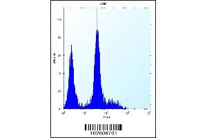 Image no. 4 for anti-Platelet-Derived Growth Factor Receptor, alpha Polypeptide (PDGFRA) (C-Term) antibody (ABIN2493032)
