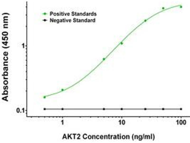 ELISA image for anti-AKT2 antibody (V-Akt Murine Thymoma Viral Oncogene Homolog 2) (ABIN2672312)