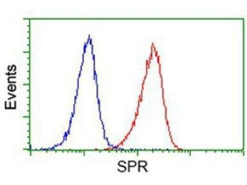 Flow Cytometry (FACS) image for anti-Sepiapterin Reductase (SPR) antibody (ABIN4355738)