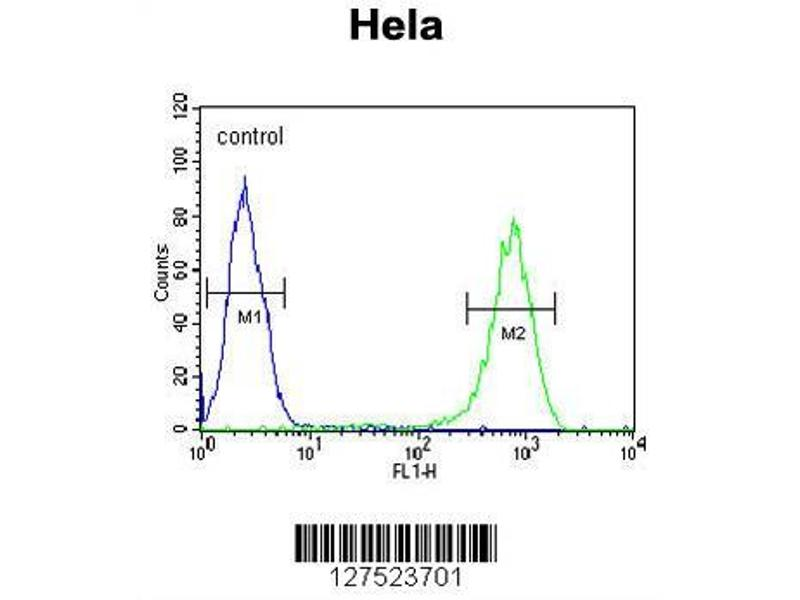 Flow Cytometry (FACS) image for anti-Stratifin (SFN) (AA 222-248), (C-Term) antibody (ABIN652173)