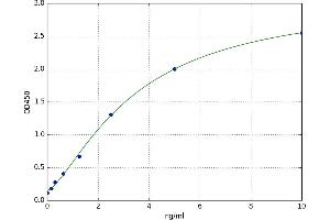 Image no. 1 for TNF Receptor-Associated Factor 6 (TRAF6) ELISA Kit (ABIN5523616)
