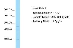 Image no. 1 for anti-Protein Phosphatase 1, Regulatory (Inhibitor) Subunit 1C (PPP1R1C) (C-Term) antibody (ABIN2790572)