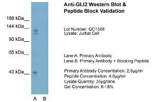 Image no. 1 for anti-GLI Family Zinc Finger 2 (GLI2) (Middle Region) antibody (ABIN2777474)