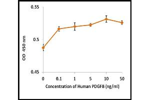 Image no. 2 for Platelet-Derived Growth Factor beta Polypeptide (PDGFB) (Active) protein (ABIN5509325)