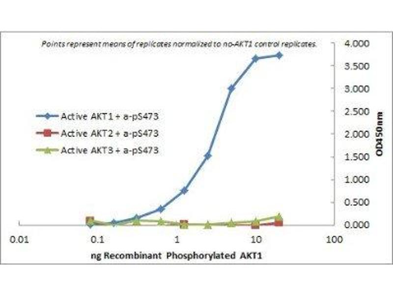 ELISA image for anti-AKT antibody (V-Akt Murine Thymoma Viral Oncogene Homolog 1) (ABIN4278989)