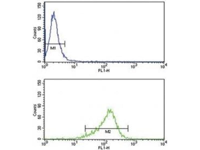 Flow Cytometry (FACS) image for anti-Interleukin 12 (IL12) (AA 168-195) antibody (ABIN3031445)